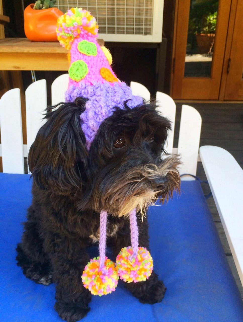Birthday hat on schnoodle dog
