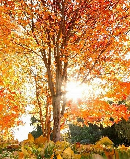 The beauty of an Autumn tree