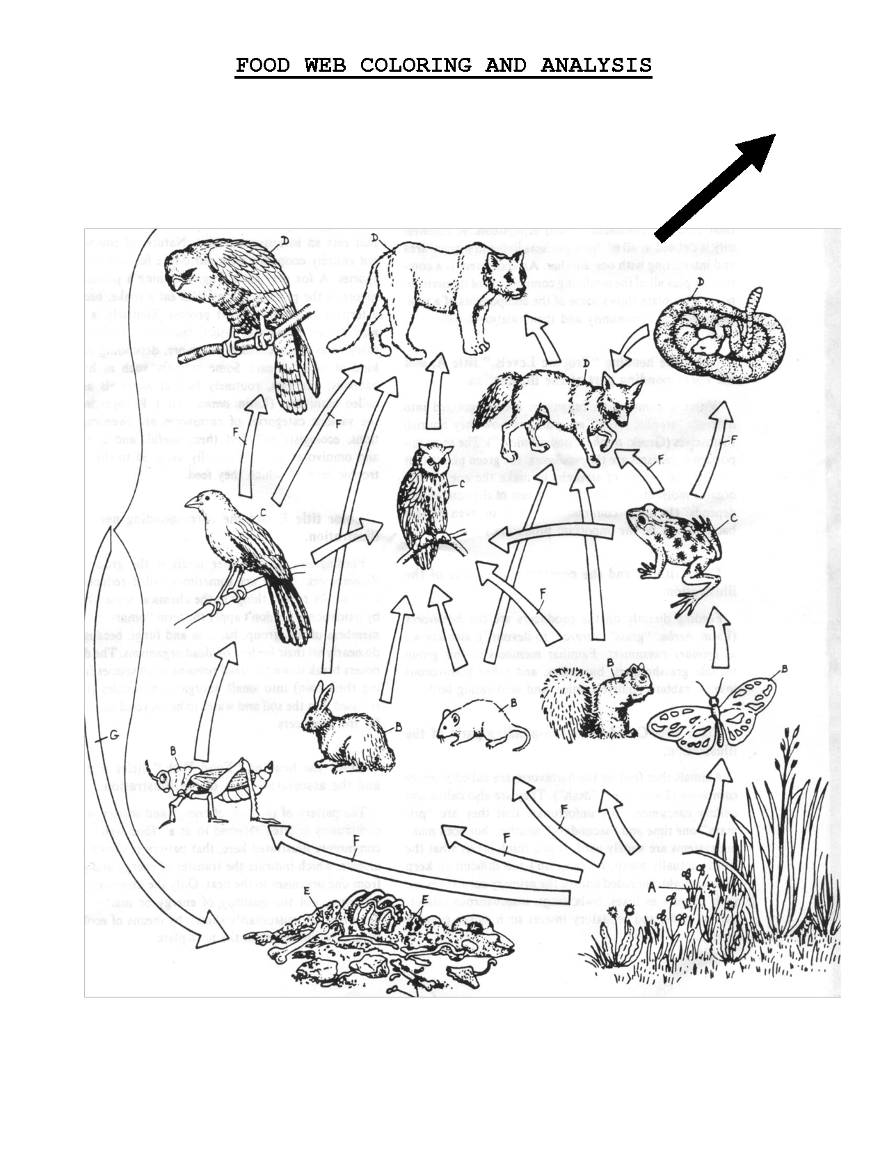 Food Web Coloring Sheet Scope Of Work Template Life Science