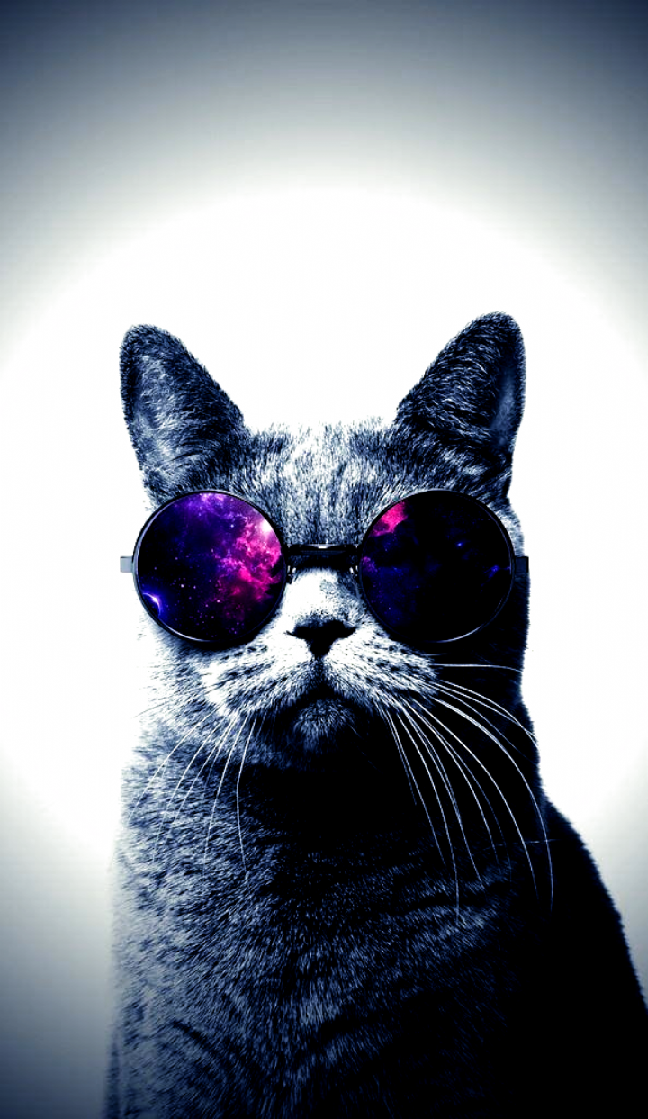 Epingle Sur Tatouage De La Cuisse Iphone Wallpaper Cat Funny Cat Memes Iphone Wallpaper Epic