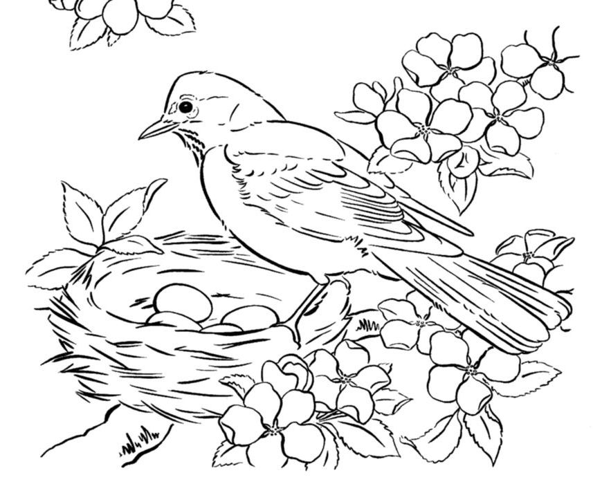 Bird House Coloring Pages Bird Coloring Pages, Animal Coloring Pages,  Mandala Coloring Pages