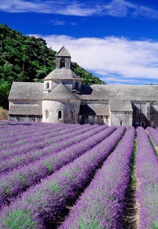Lavender fields Provence France (Credit: Travel Pix /Getty)