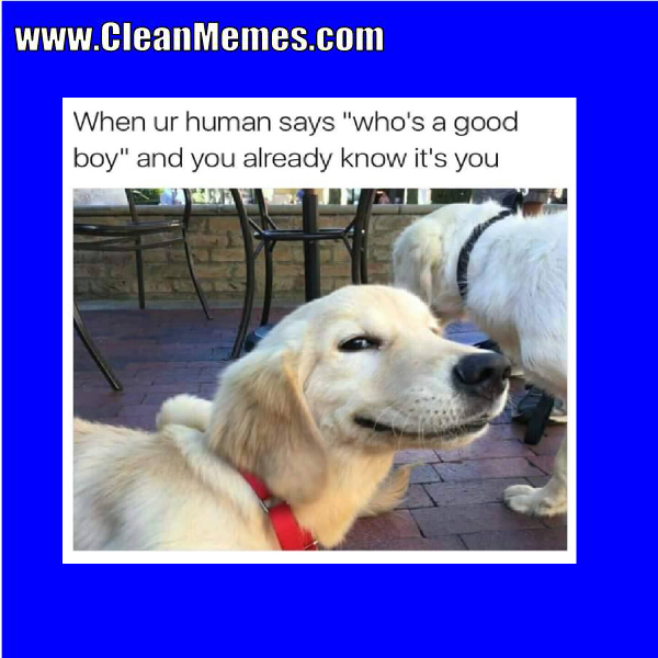 Pin by Clean Memes on Clean Memes Cute dog memes, Dog