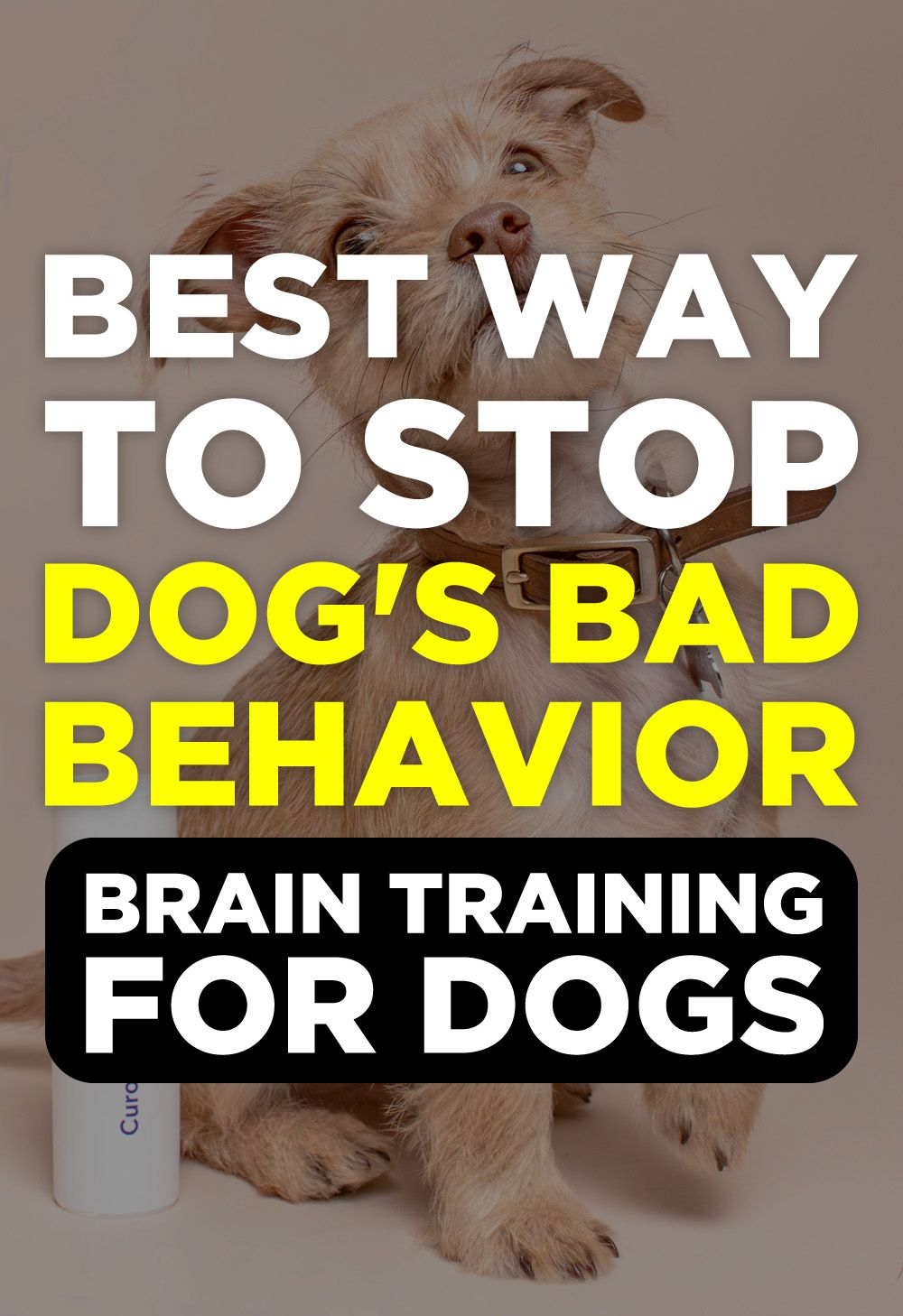 Brain training for dogs review puppy training schedule