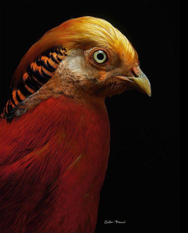 BIRD Gary Heery Book-completemmockup-110.jpg