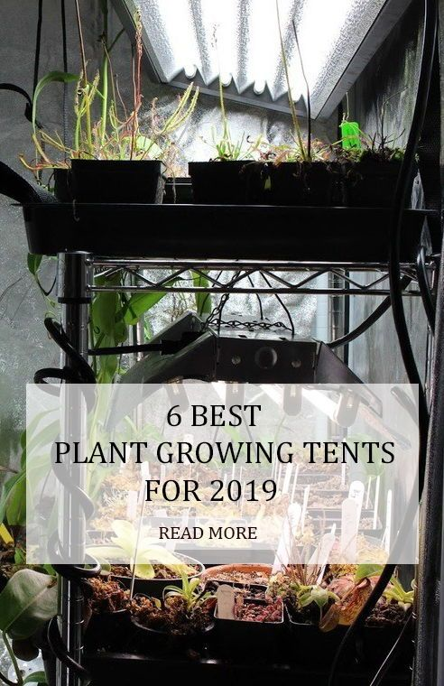 6 Best Plant Growing Tents For 2020 Cool Plants Garden 400 x 300