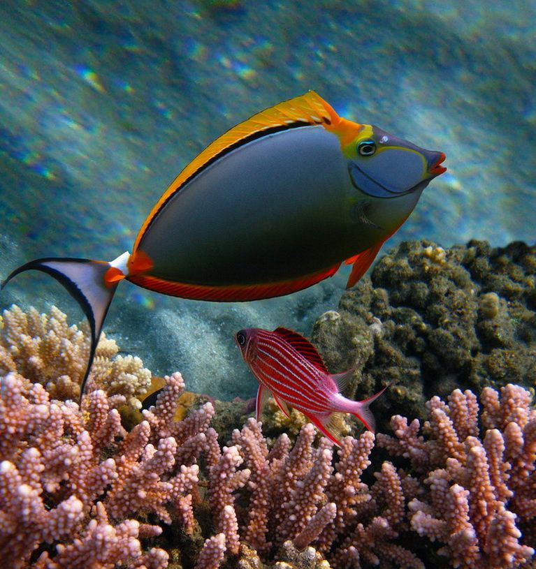 You can 39 t make this stuff up orange unicorn fish for Red sea fish