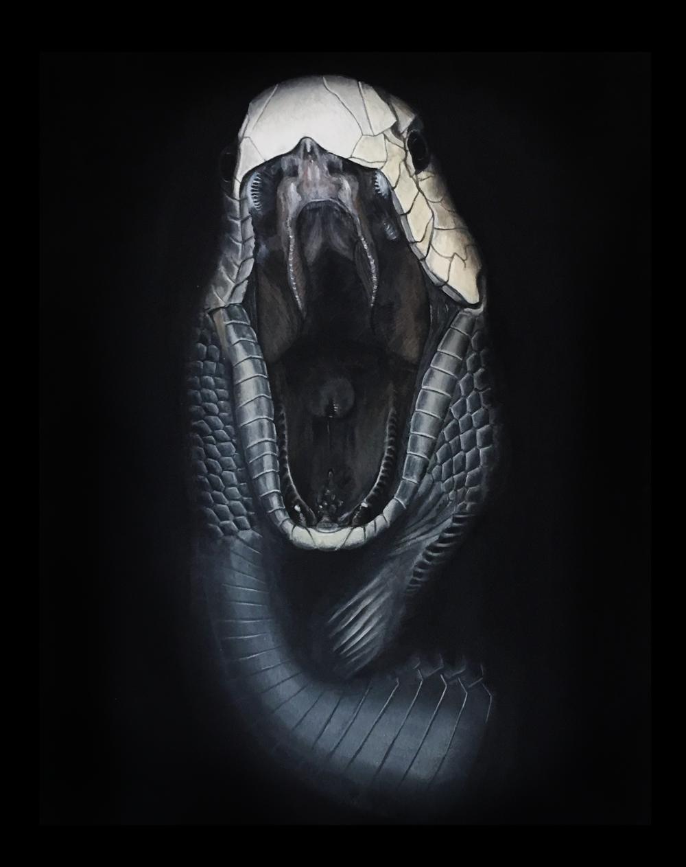 Чёрная мамба рисунок