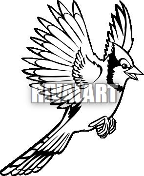 Blue Jay In Flight Drawing 94295 Dfiles Free Clip Art Drawings Art