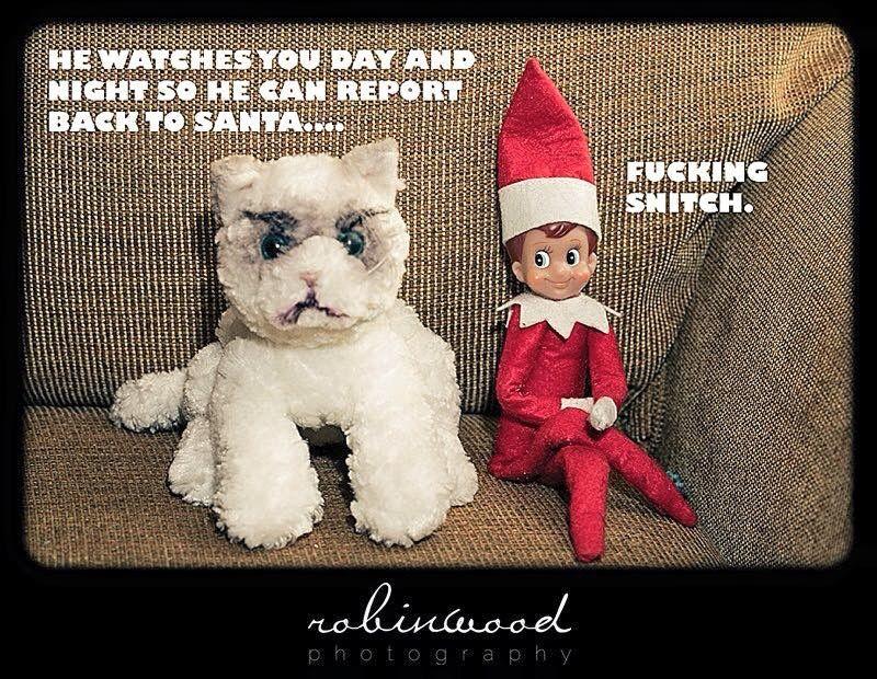 Pin by Tina Shedd Adams on Elf on a shelf Grumpy cat
