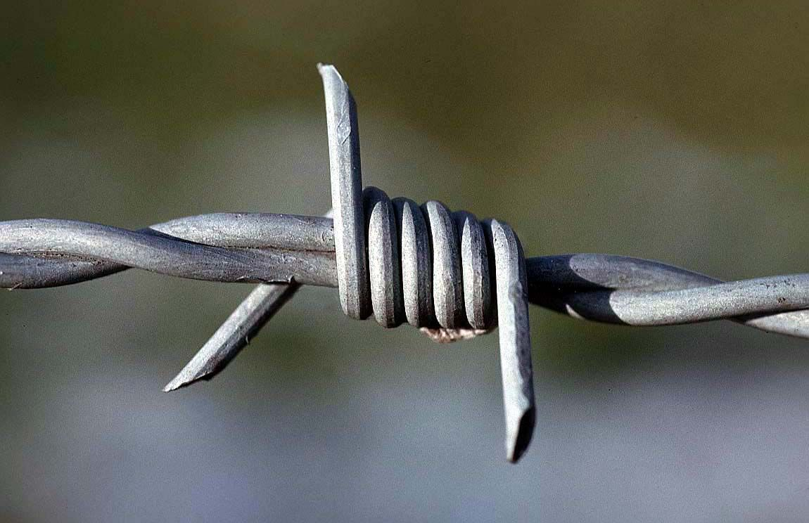 barbed wire - Google Search   Big Project   Pinterest