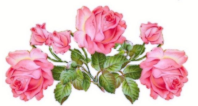Decal Roses   Flickr - Photo Sharing!