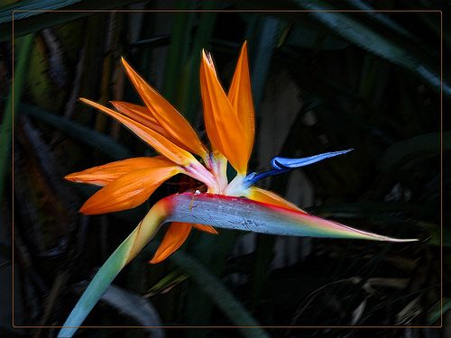 Flowers That Look Like Birds Google Search Meaning Of Bird Of