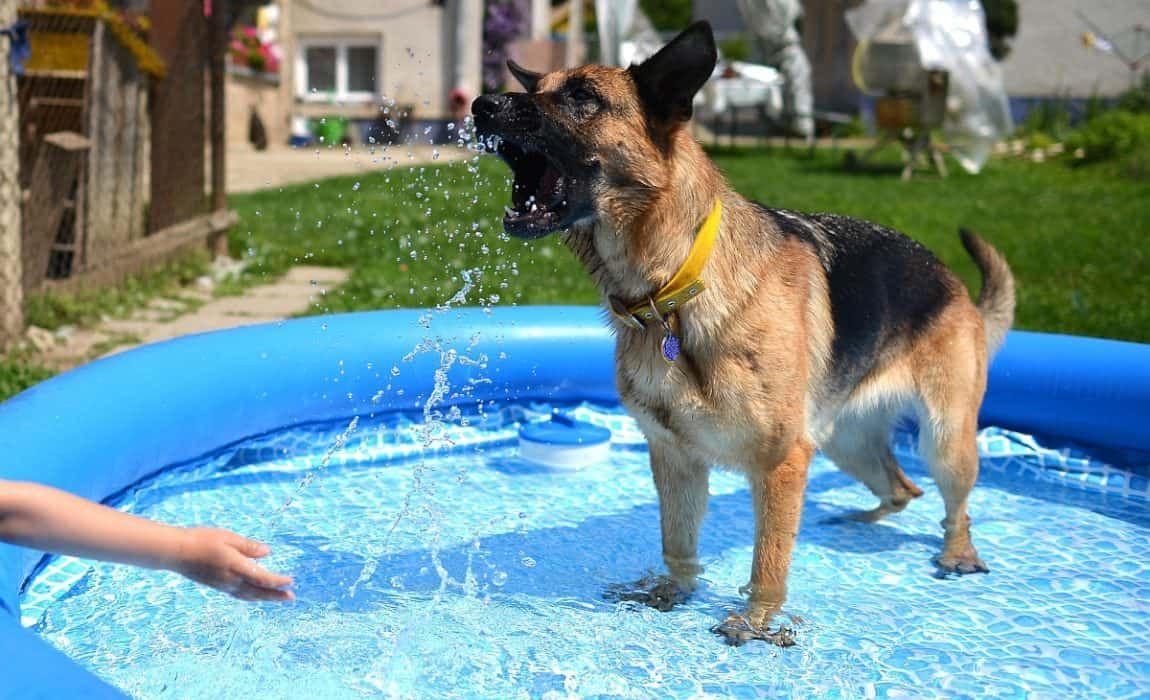 5 Best Dog Pools A Great Way To Let Spot Go For A Swim Hundepool Hunde Sachen Hunde Teich