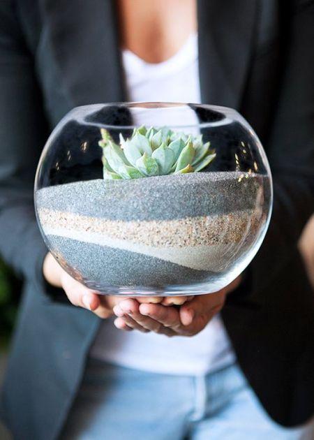 Terrarium Un Bout De Terre Pour Certaines Especes Vegetales