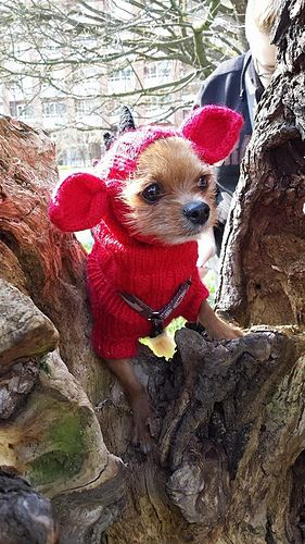 Knitted Dog Hats With Ears Easy Free Patterns Pinterest Free