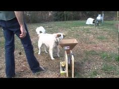 Diy Automatic Ball Launcher Automatic Ball Launcher Ball Launcher Dog Ball