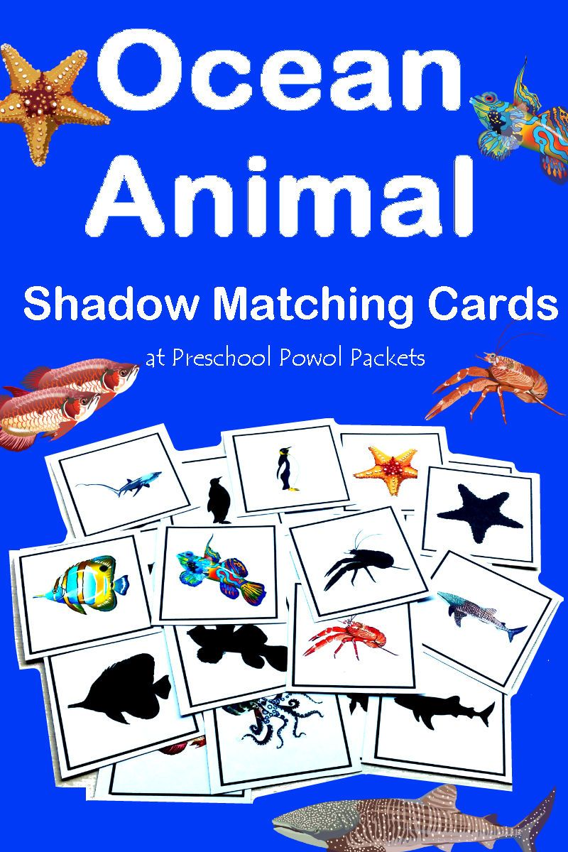 Sea Animals Videos For Kindergarten