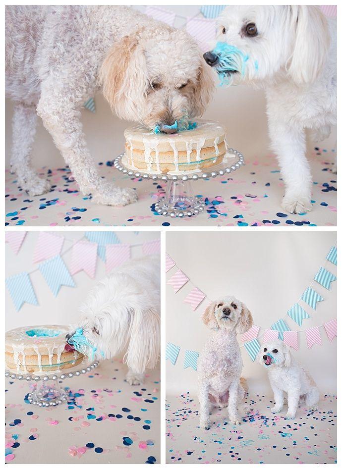 An Adorably Creative Dog Cake Smash Gender Reveal Gender Reveal