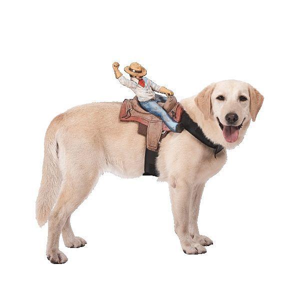 Ride On Cowboy Dog Costume Kyrawill Love This Hahaha Cowboy Dog