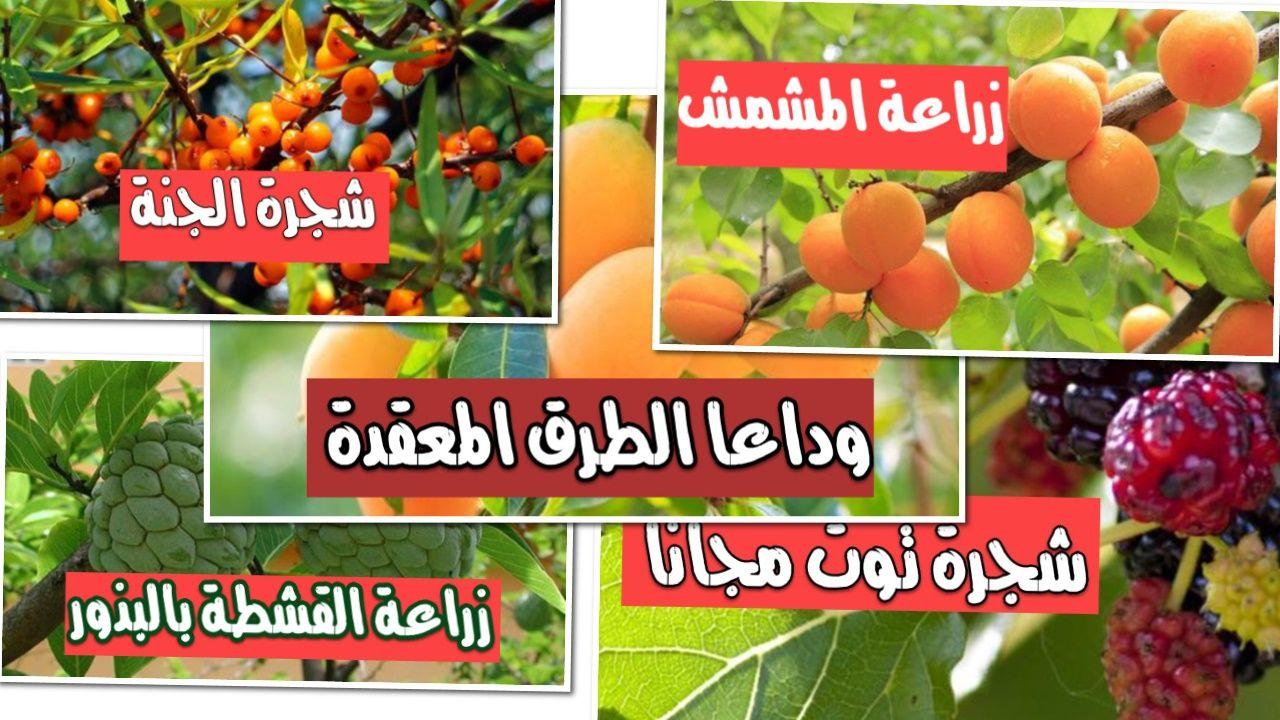 زراعة الاشجار المثمرة In 2021 Grapes Fruit Food
