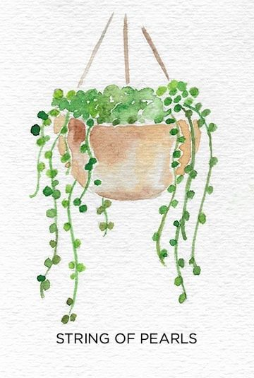A Guide to Caring for Easy to Grow Indoor Plants -   17 indoor plants Watercolor ideas