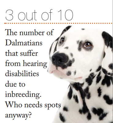 Did you know 3 out of 10 Dalmatians suffer from hearing ...