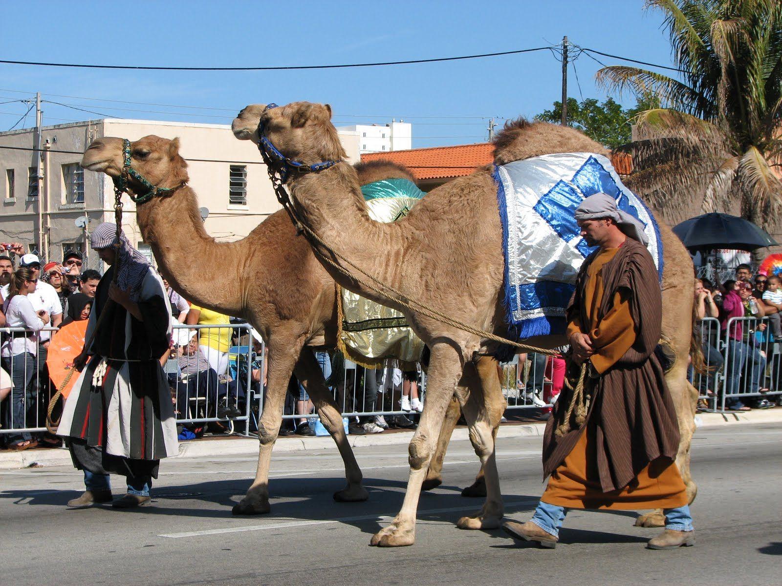 reyes magos camellos - Buscar con Google | proyectos dibujos ...
