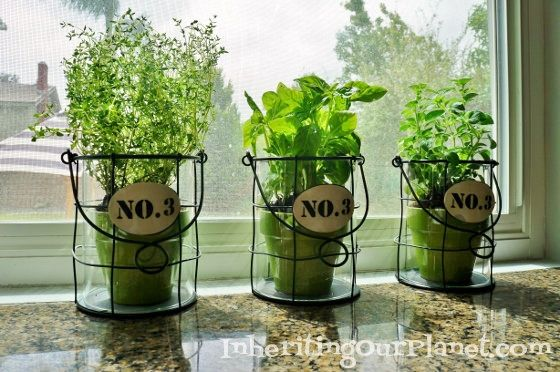 Nice Tips For Growing Your Own Herbs   DIY Inspired