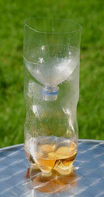 Trampa Para Avispas Con Vinagre Agua Y Sal Decoraciones De