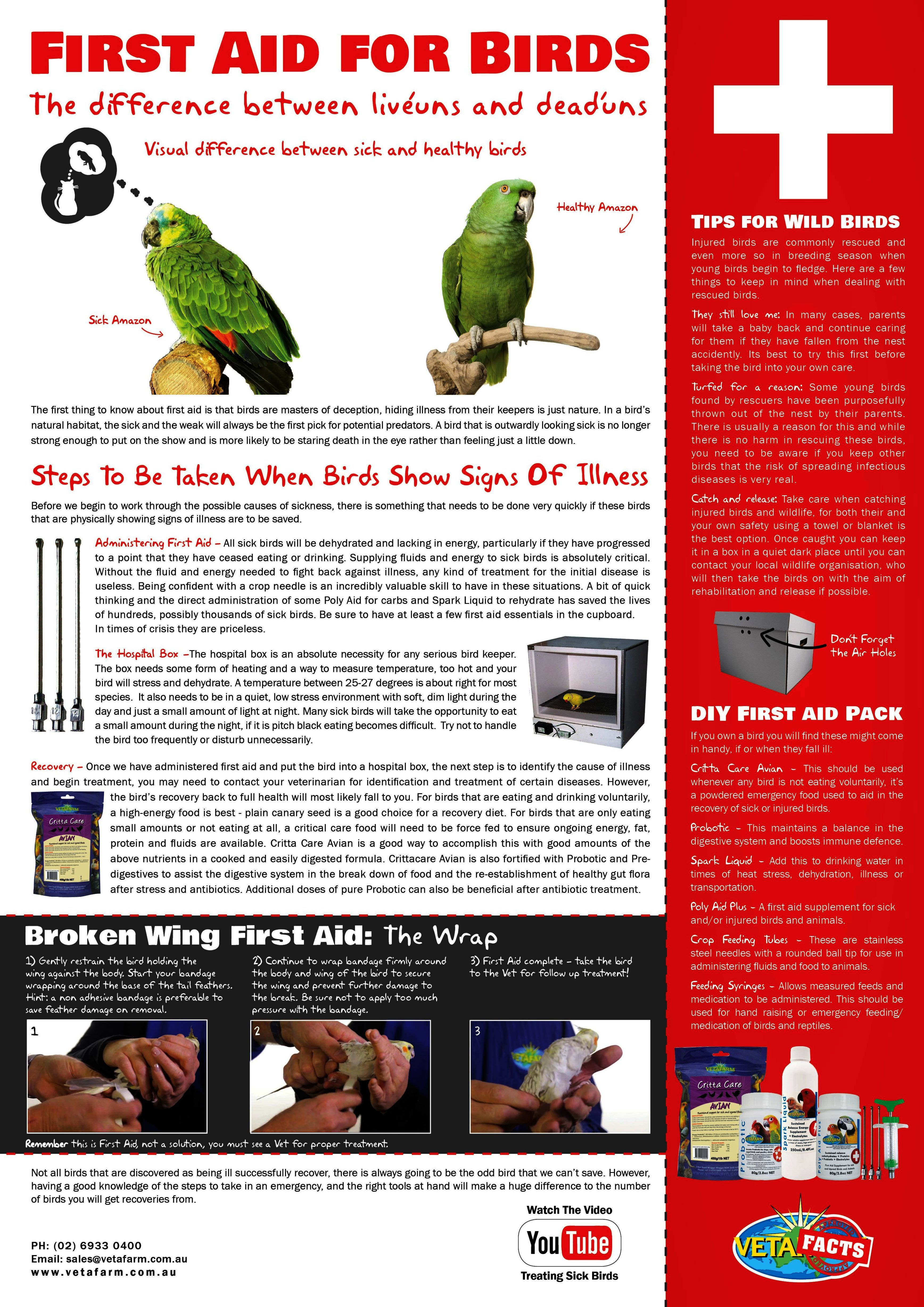 Pet Birds For Sale Near Me Pet Birds Low Maintenance | Birds | Pet