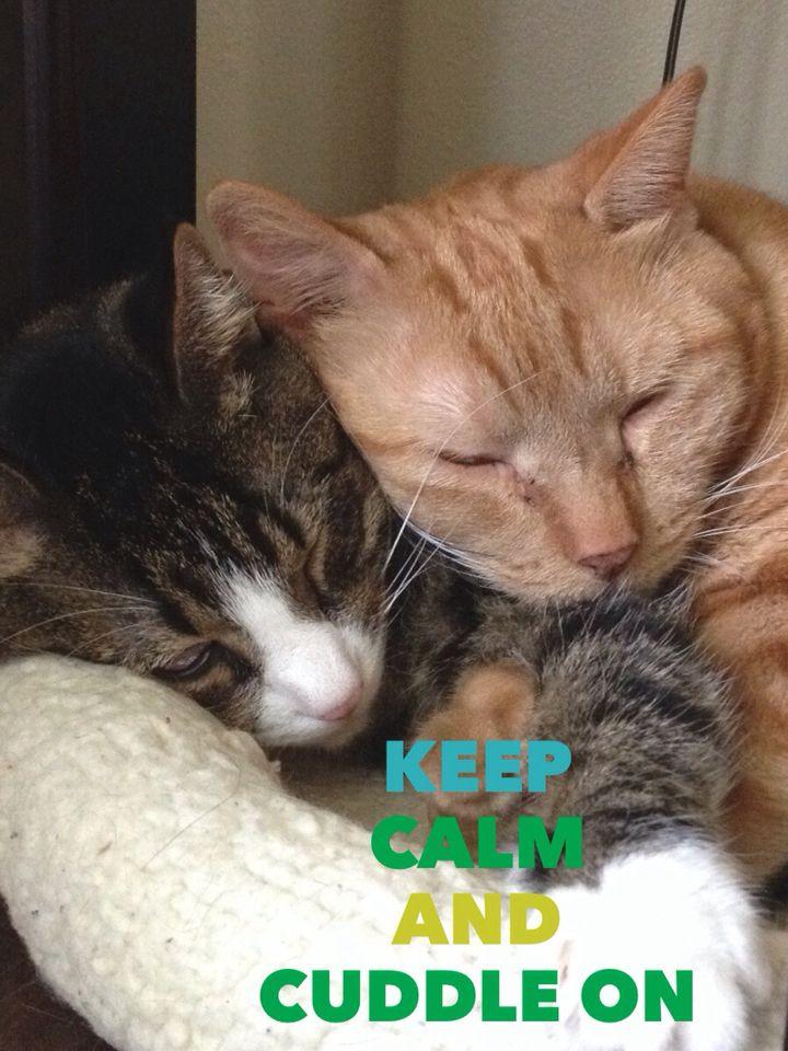 Keep Calm And Cuddle On Cuddling Animals Calm