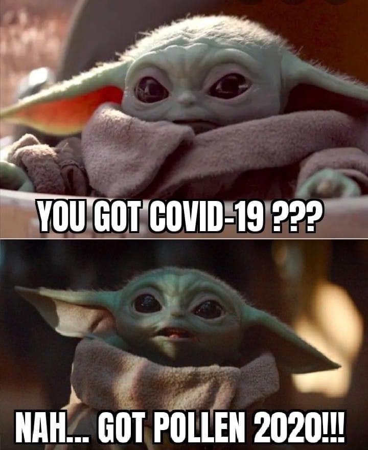 Baby Yoda In 2020 Yoda Funny Funny Memes Kid Memes