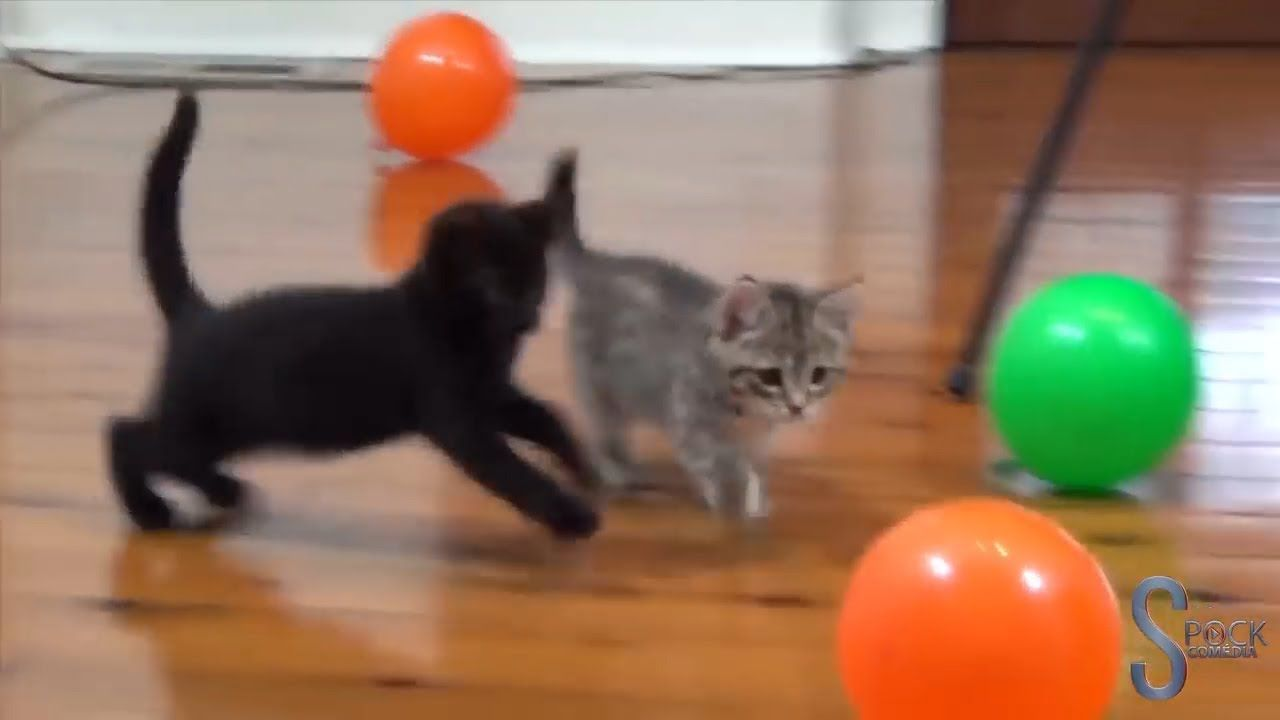 Funny and Cute Cats Playing and Meowing Cute cats, Cat