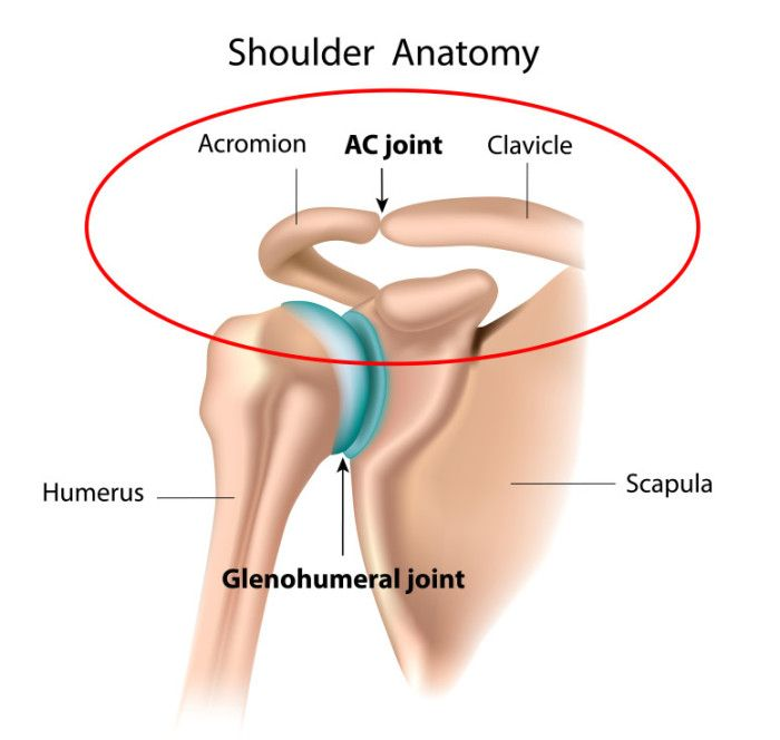 Ac Jt Scapula Concave Same Shoulder Pinterest Shoulder