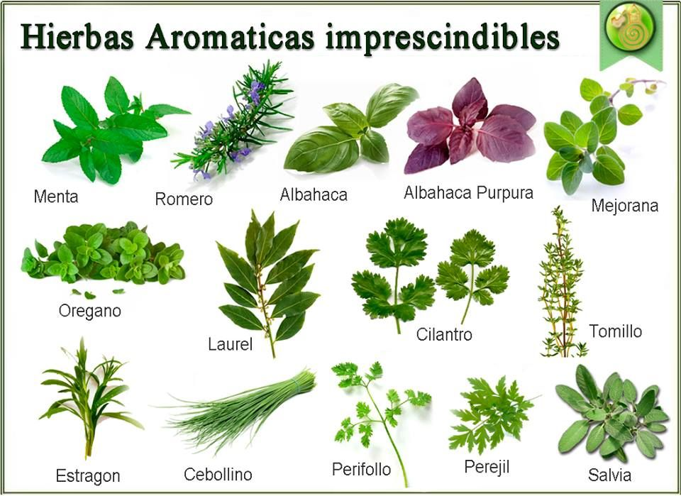 Etiquetas para plantas aromaticas buscar con google for Hierbas aromaticas y medicinales