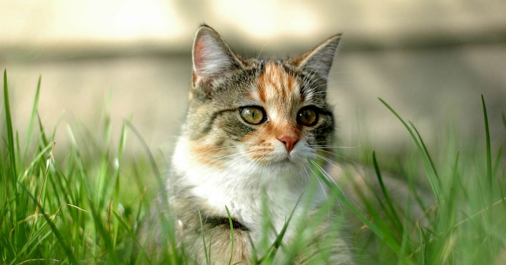 6 Tips for Taking Great Photos Of Your Cat (With images