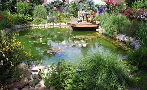 Gartenteiche schön bepflanzen Schwimmteich Pinterest