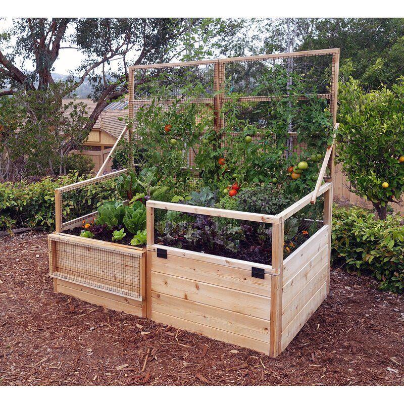 6 Ft X 3 Ft Raised Garden Cedar Raised Garden Beds Backyard Vegetable Gardens Cedar Raised Garden