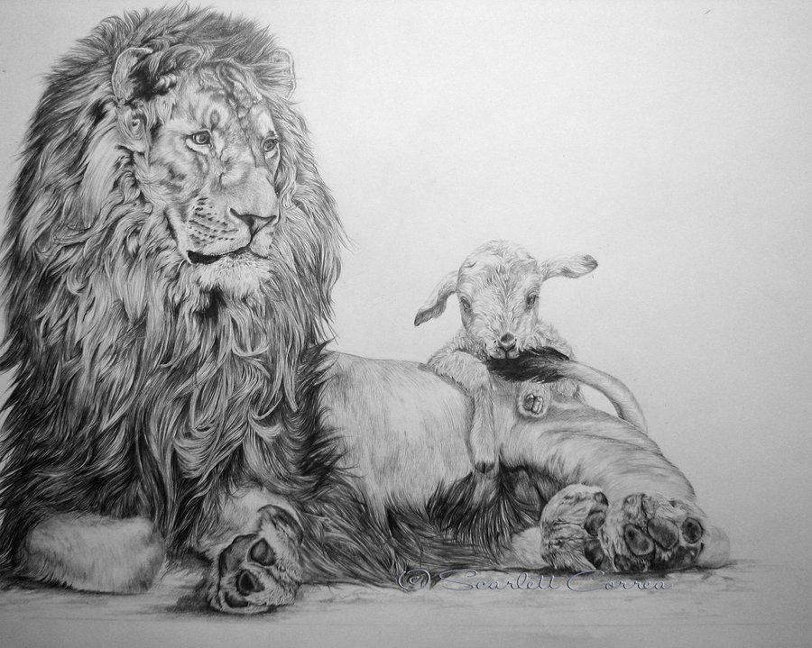 Lion and lamb by ~ElusiveDreams07 on deviantART | Images-Biblical ...