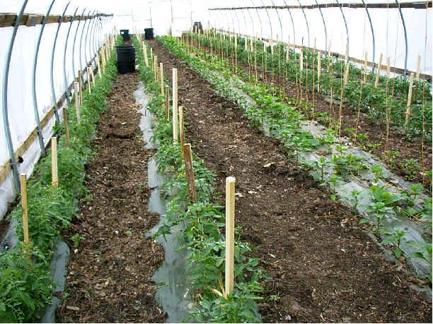 High Tunnel Agriculture Good Ideas Tunnel Greenhouse
