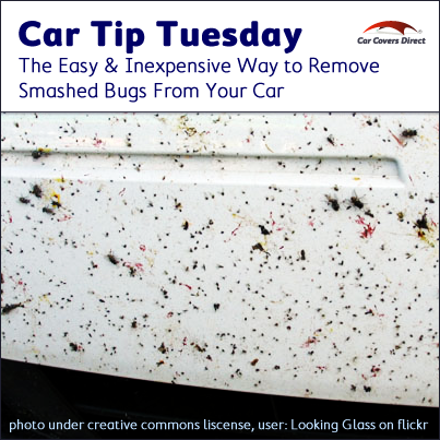 It's Car Tip #Tuesday! Here's an easy and inexpensive way to get smashed bugs off of your #car.