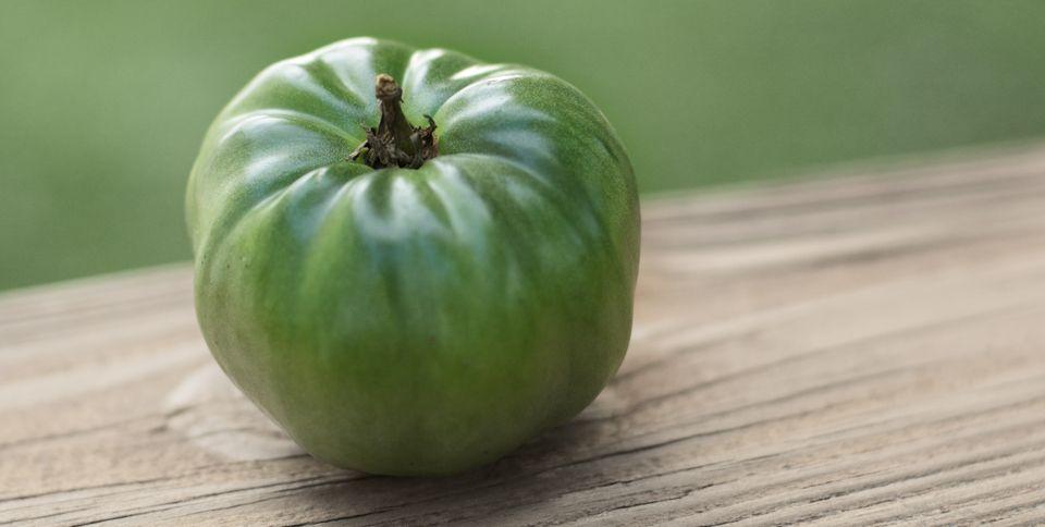 Jak się bronią rośliny przed zjadaniem   Zdrowie
