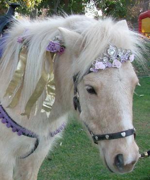 My Pony Go Round Pony Rides Petting Zoo Birthday Party Zoo Birthday Party