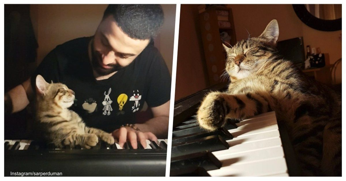 Piano Playing Cat Has Pretty Much The Best Instagram Account Ever Cats Cute Animal Photos Gorgeous Cats