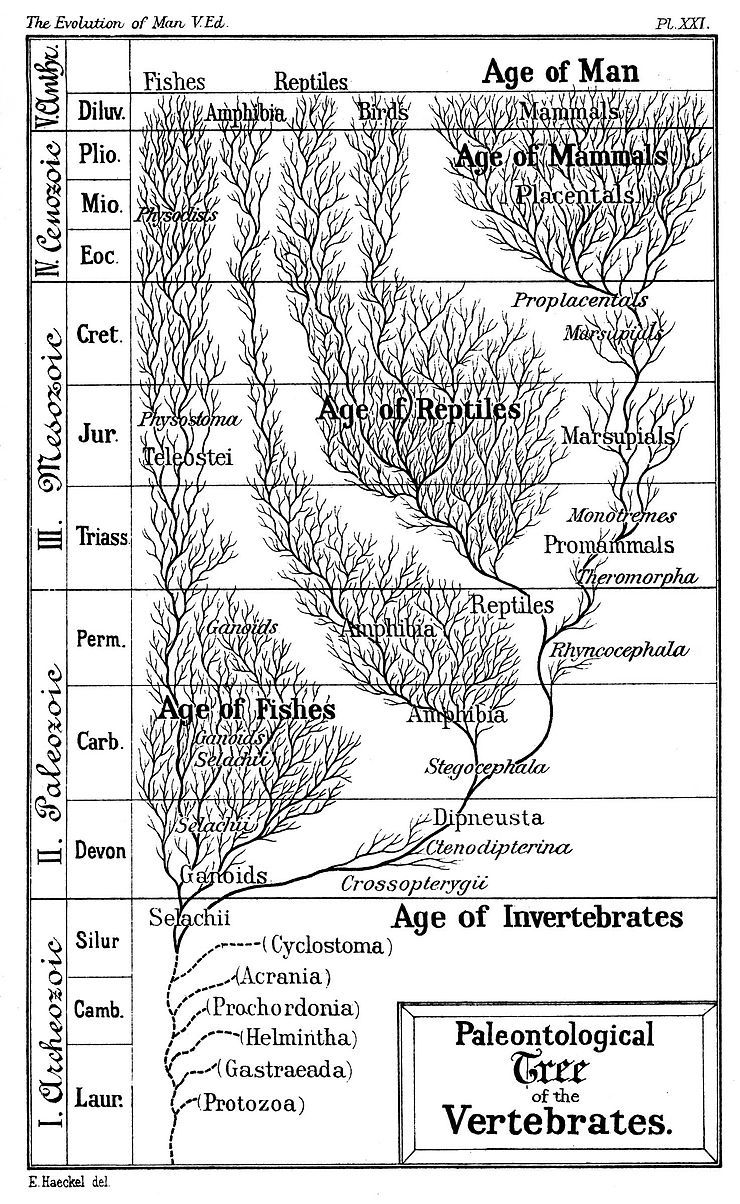 Timeline Of Human Evolution Human Evolution Ages Of Man Tree Of Life Images