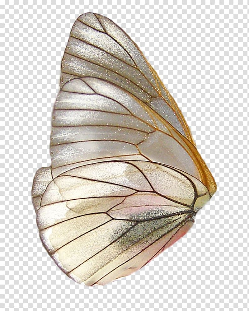 Brown Butterfly Wing Illustration Butterfly Wing Feather Clip Feather Wings Fantasy Butterfly Wings Transparent Background Png Collage Design Art Collage Art