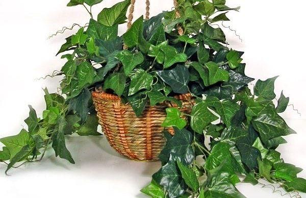 5 Plantes Qui Absorbent L Humidite De Toutes Les Pieces En 2020 Idees De Jardinage Jardin Maison Plante Salle De Bain
