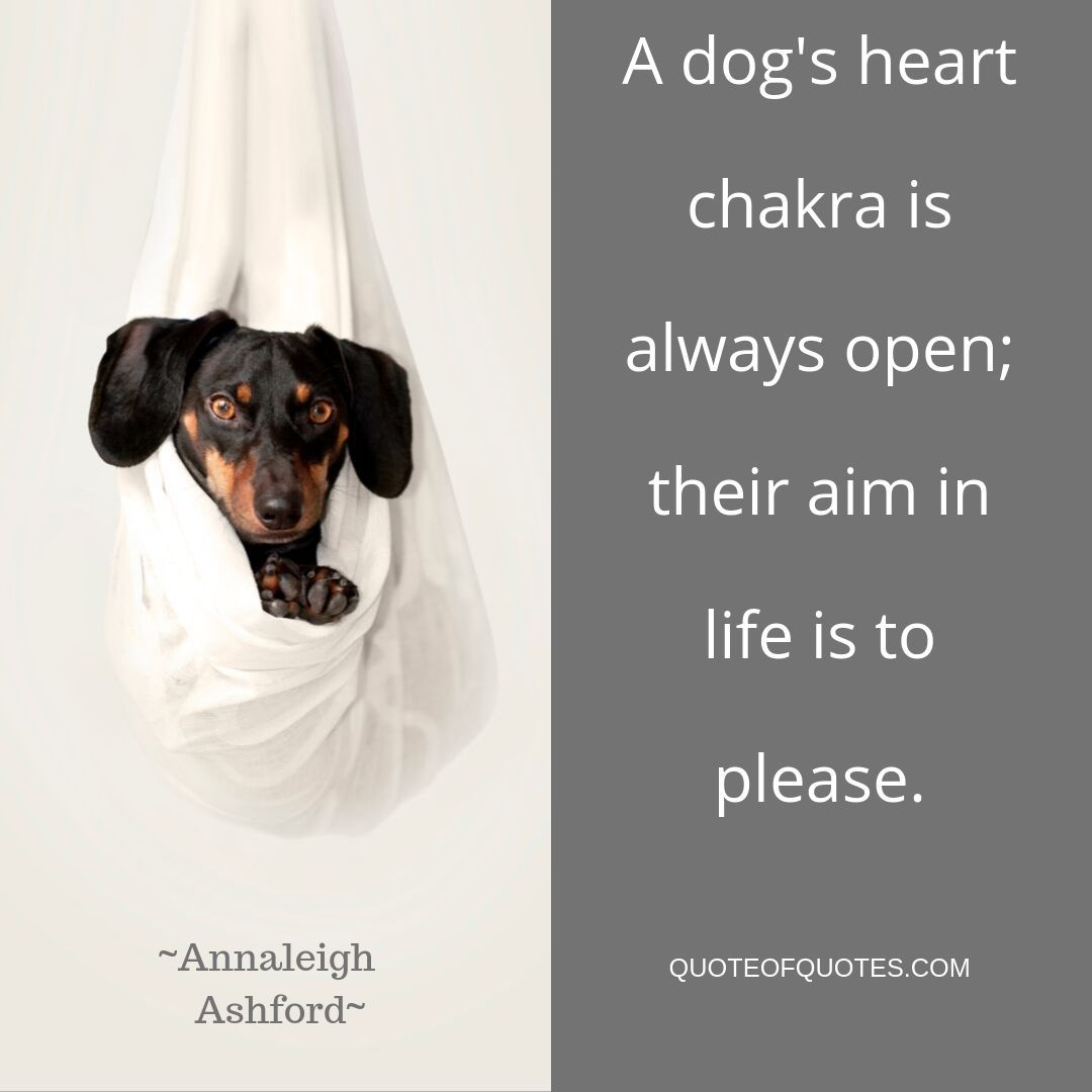 Check Quoteofquotes Com For More Dog Pet Chakras Chakra Buddhist Buddha Meditation Love Lovequotes Happiness Energy Happy Quotes Quotes By Famous People Aim In Life