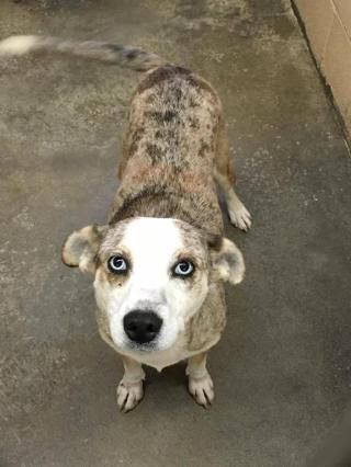 Pet Profile Pets Pet Adoption Pet Search